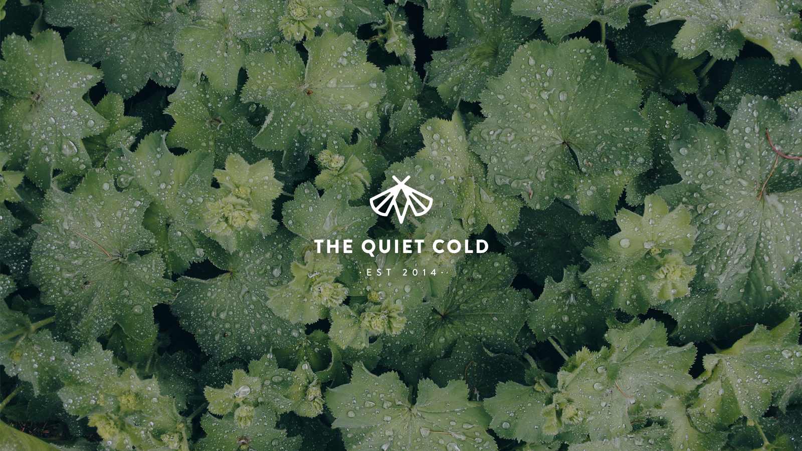 Logo Design: The Quiet Cold